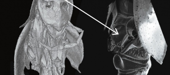 Slovenskí vedci objavili neobvyklého švába, ktorý vyzerá ako postavička zo Star Wars