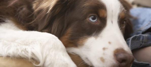 Žena vysúdila nemocenské dávky za starostlivosť o svojho chorého psa