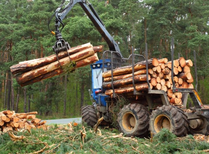 Ficova vláda bojuje proti nezákonnej ťažbe dreva novým zákonom, za porušenie hrozí sankciami
