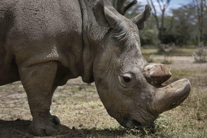 Nosorožec v mexickom safari parku zaútočil na auto s návštevníkmi