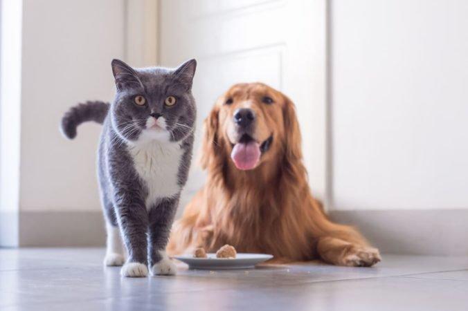 Obyvatelia Hanoja zrejme už nebudú konzumovať psy a mačky, úrady im poslali výzvu