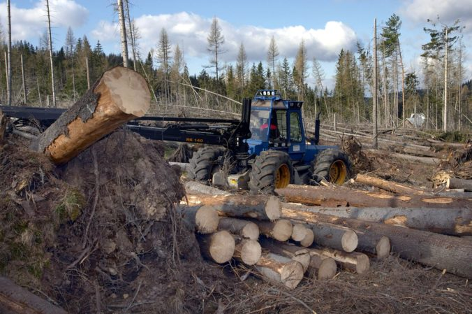 V podniku Lesy SR nevidia priestor na zvyšovanie platieb za ťažbu dreva, podnikatelia chcú viac