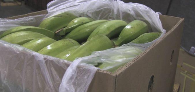 V škatuliach s banánmi darovanými do väznice našli kokaín za 18 miliónov dolárov