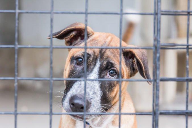 Karanténna stanica pre psy v Trebišove je ako koncentrák, tvrdia ochranári a podávajú podnet
