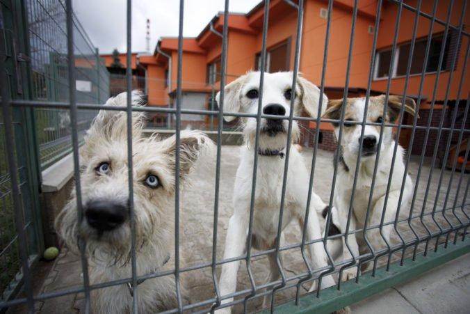 Foto: Do útulku v Bratislave pribudlo tento rok viac než dvetisíc zvierat