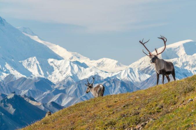 Rýchle topenie ľadovcov láka na Aljašku viac turistov