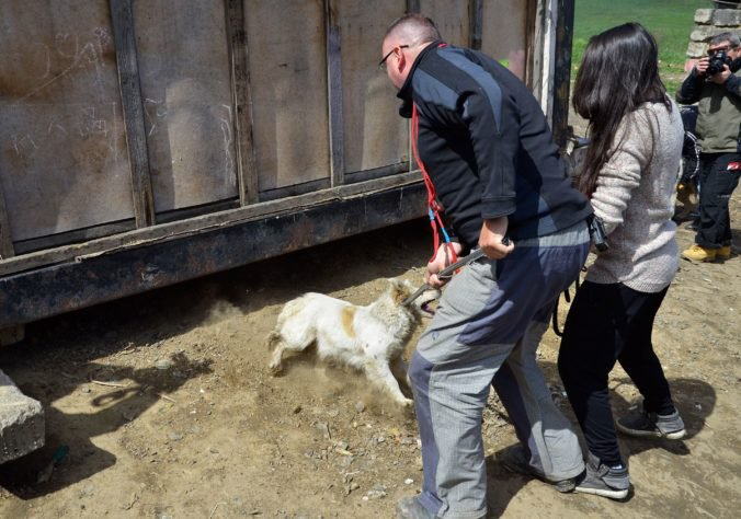 Rómsky splnomocnenec chce pomôcť osadám pri povinnom čipovaní a očkovaní psov