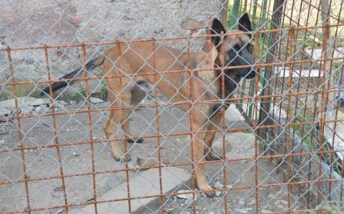 Foto: Dva zúrivé psy napadli dôchodcu, podhrabali sa pod plotom a spôsobili mu devastačné zranenia