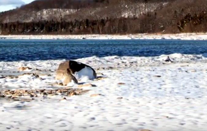 Pláž na ostrove Hailuoto pokryli tisícky ľadových gulí, niektoré boli veľké ako futbalové lopty
