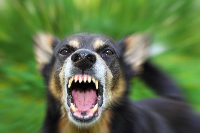 Tehotnú ženu zabili psy, polícia prípad vyšetruje ako zabitie