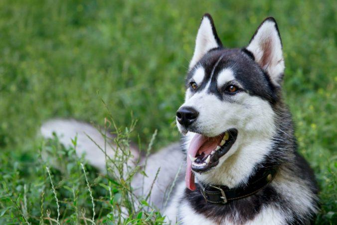 Hasiči riešili kuriózny incident, psovi sa podarilo zapnúť mikrovlnnú rúru a spôsobiť požiar