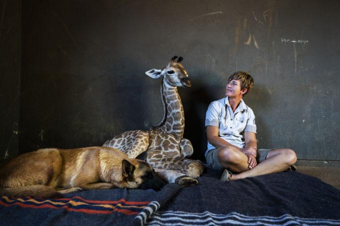 Dojímavý príbeh o priateľstve psa a žirafy sa skončil smutne, žirafie mláďa náhle zomrelo