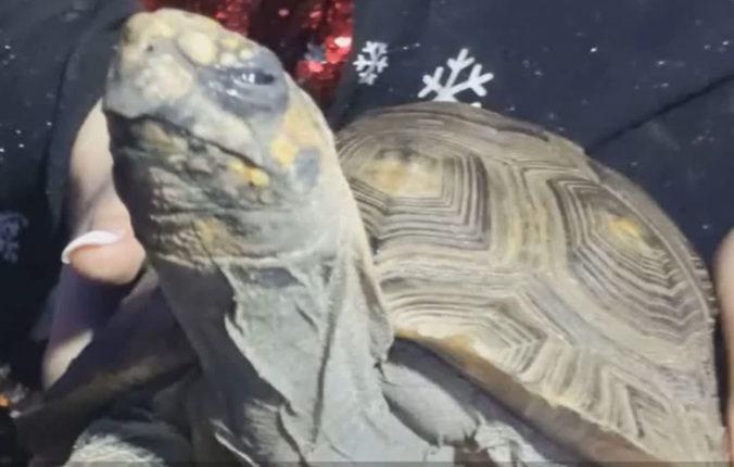 Na Vianoce zachránili korytnačku, ktorej sa podarilo podpáliť dom