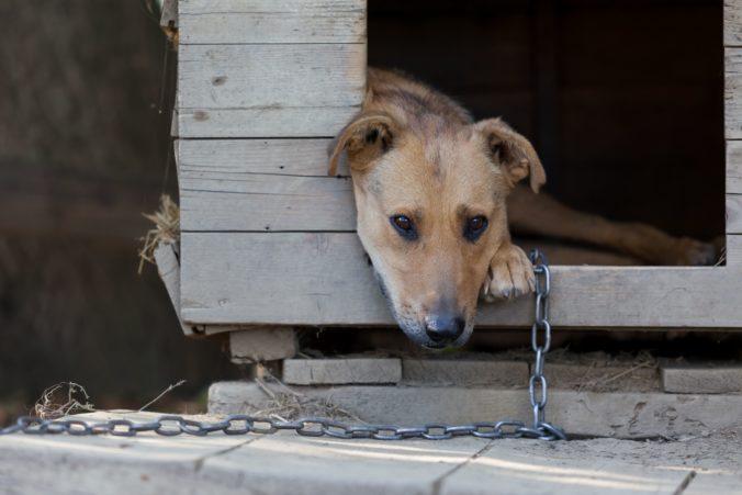 Viac než polovica Slovákov podporuje zákaz držania psov na reťazi
