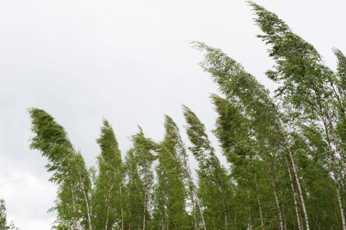 Silný vietor zasiahne Slovensko, na juhozápade krajiny môže napáchať väčšie škody