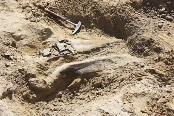 Paleontológovia popísali nových vtákojašterov spred 100 miliónov rokov