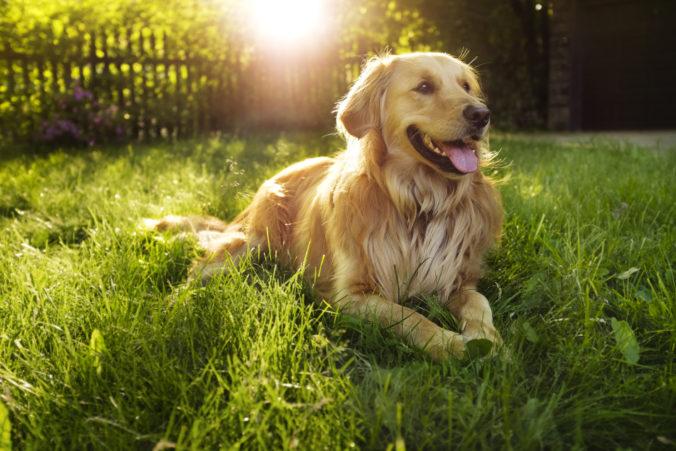 Američanka vycvičila svojho psa, ktorý starej pani v susedstve nosí počas karantény potraviny