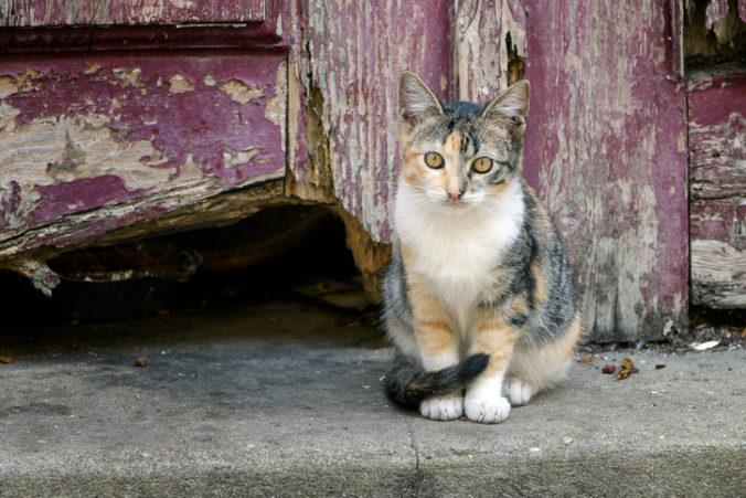 Dve mačky z New Yorku mali pozitívny test na koronavírus, pravdepodobne sa nakazili od majiteľov