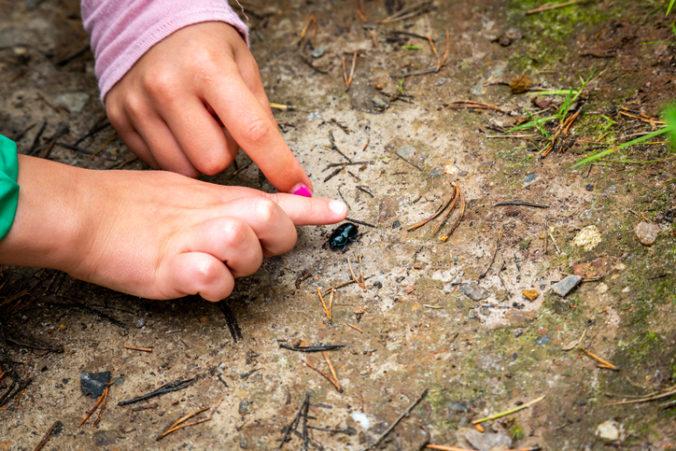 Situácia s hmyzom vo svete je komplikovaná, úbytok je výrazný