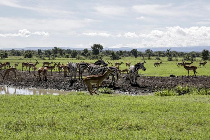 Virtuálne safari upozorňuje na potrebnú pomoc pre zvieratá v čase koronakrízy