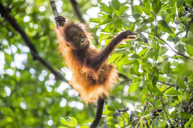 Opice zaútočili na laboratórneho asistenta a ukradli mu vzorky krvi pacientov s podozrením na koronavírus