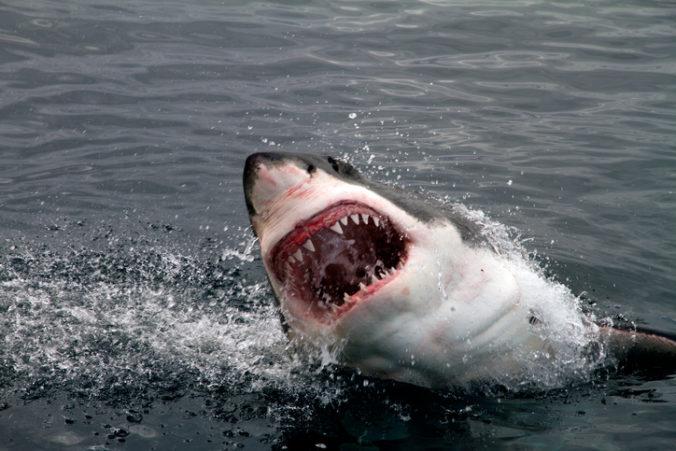 Trojmetrový žralok zabil 60-ročného surfistu, viacerí ľudia sa ho snažili zachrániť