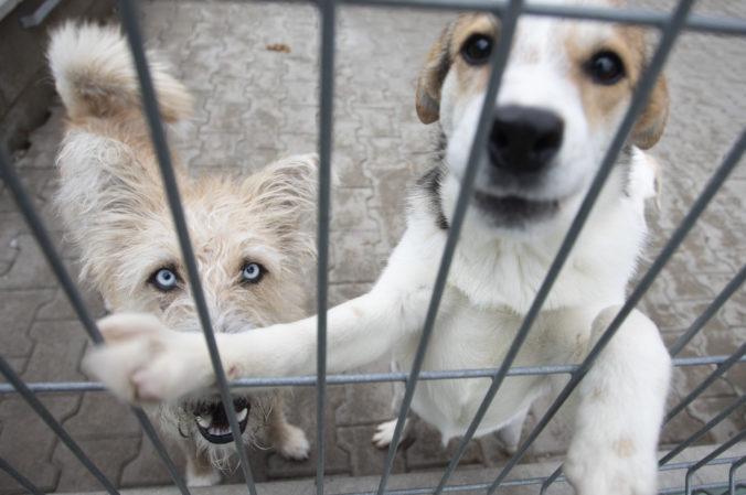 Týranie zvierat bude riešiť špecializovaný tím, liberáli z SaS pripravujú aj novelu trestného zákona