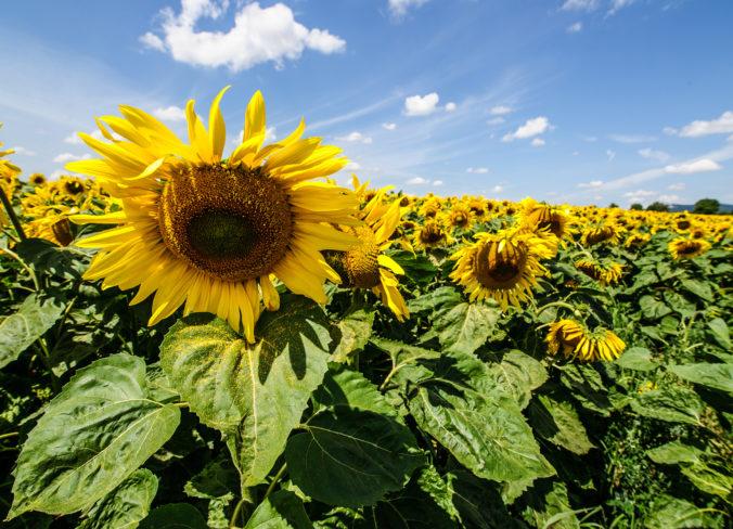 Čaká nás teplý a slnečný deň, ale miestami sa môžu vyskytnúť prehánky či búrky