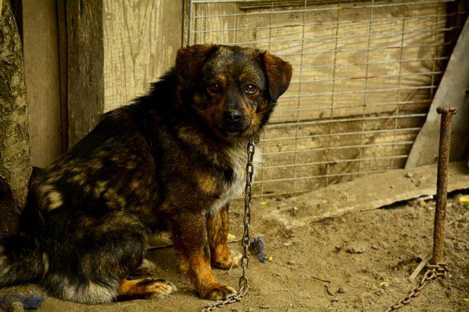Trest za utýranie zvieraťa sa možno zvýši, nelegálne má byť po novom byť aj organizovanie zvieracích zápasov