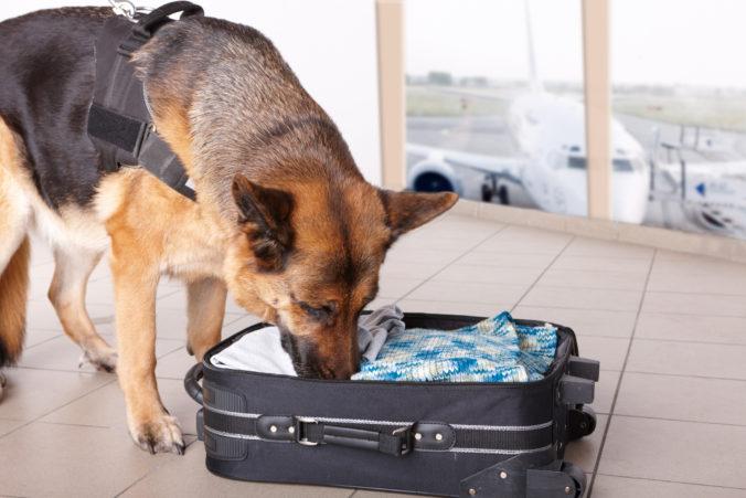 Policajné psy dostali na letisku v Dubaji novú úlohu, budú zisťovať prítomnosť koronavírusu