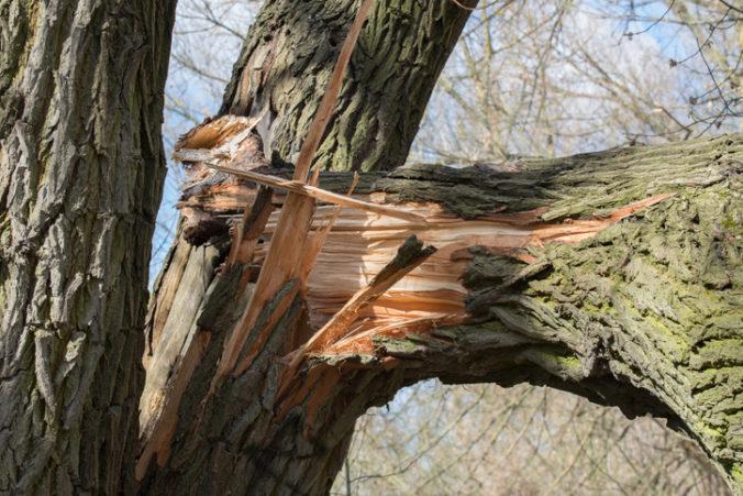 Strom v talianskom kempingu nevydržal nápor silného vetra, zabil dve malé dievčatká