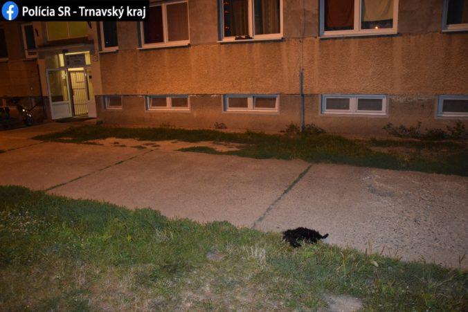 Z okna ubytovne vyhodili šteniatko, pád z výšky neprežilo a podozrivého polícia prepustila (foto)