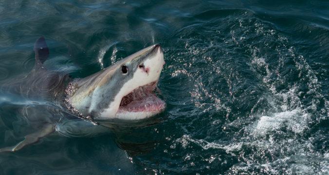 Žralok napadol v Austrálii surfistu, muž zomrel i napriek okamžitej pomoci