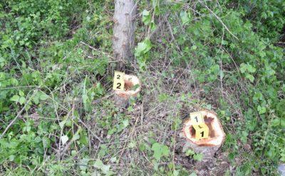 Mladí chlapci zoťali sekerou najmenej šestnásť stromov, prichytili ich priamo pri čine