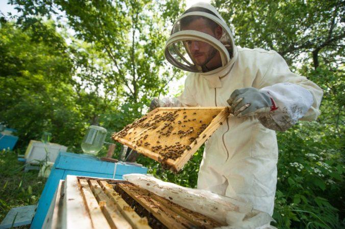 Nahlasovanie miesta pohybu včiel či hodiny pre seniorov získali anticenu za byrokratický nezmysel