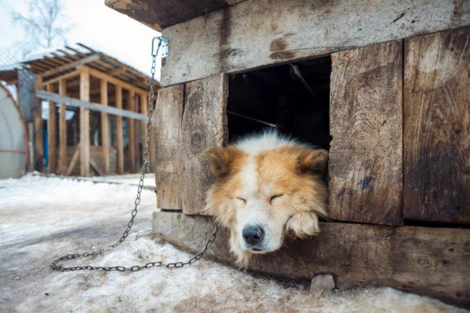 Držíte psov alebo mačky na dvore? Zvýšené riziko pre nich predstavuje zima aj samota