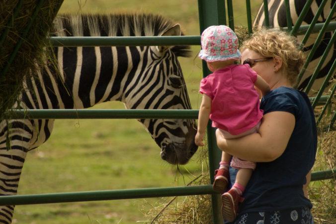 Zoologické záhrady trápi zlá finančná situácia, podporí ich benefičný online koncert
