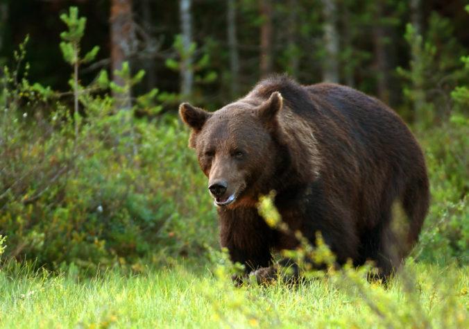 Rakúsky princ údajne neoprávnene zastrelil medveďa, úrady majú podozrenie z pytliactva