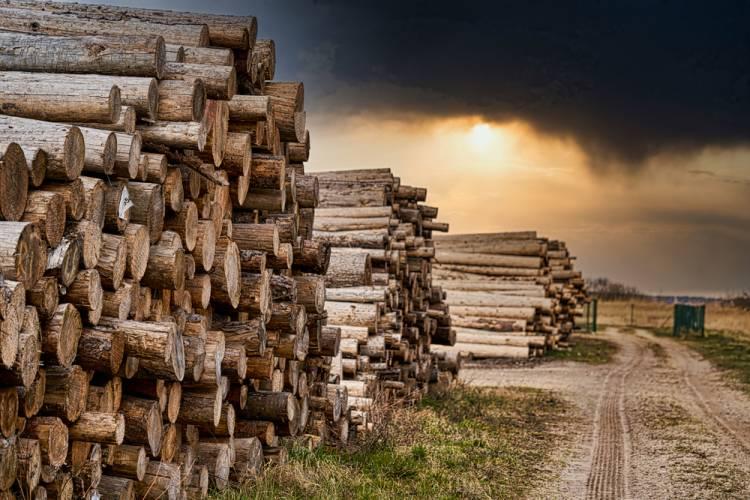 Považujete drevo za stavebný materiál z minulosti? Mýlite sa