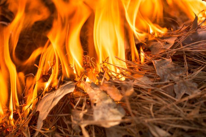 Sicília bojuje s desiatkami lesných požiarov, miestni predstavitelia žiadajú Rím o pomoc