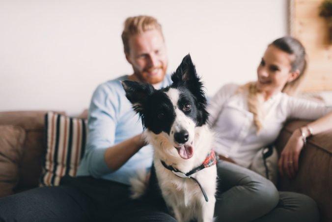 Pes je u Slovákov obľúbenejší ako mačka, aspoň jedného vlastní 39 percent obyvateľov