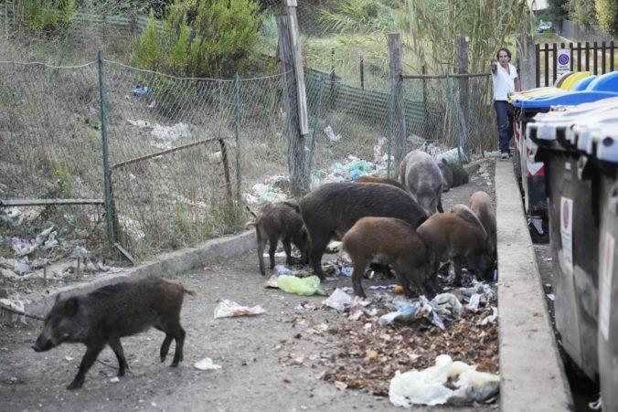 Rím má problém s neželanými návštevníkmi. Diviaky sa potulujú v parkoch aj uliciach a hľadajú jedlo