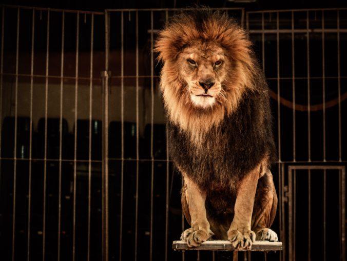 Petíciu za zákaz používania divokých zvierat v cirkusoch dostane už čoskoro eurokomisia