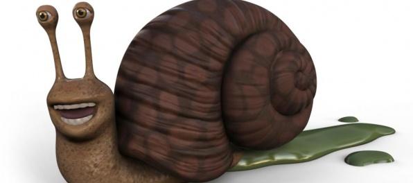 10 najpomalších zvierat na svete